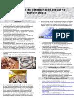 Manipulação da determinação sexual na biotecnologia.pptx