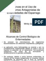 Alcances en El Uso de Organismos Antagonistas de Enfermedades Del Esparrago