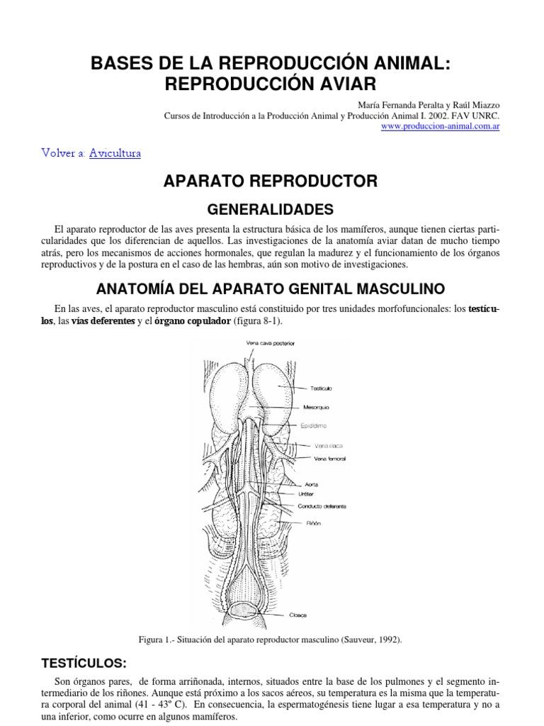 Anatomia Reproductiva Aviar