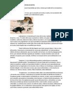 Enfermedades Que Provocan Las Ratas