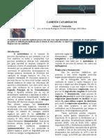 Caminos metabólicos (A. Fernánez, Elemental Watson)
