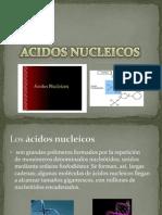 acidos nucleicos.pptx