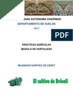 GENERALIDADES DEL BRÓCOLI