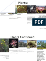 chaparral plants
