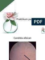 Latihan pratikum parasitologi1