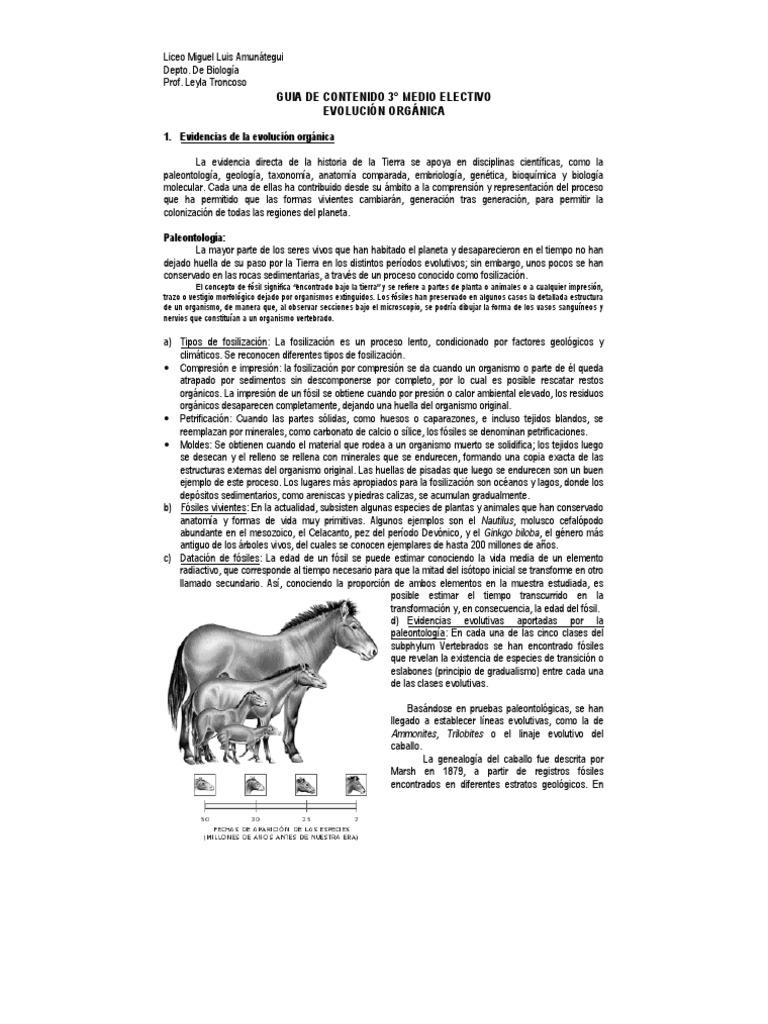Único Cómo Apoya La Anatomía Comparada De La Teoría De La Evolución ...
