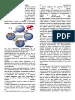 imprimir valores.docx