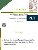 17-pares-craneales-1201130538583042-4