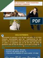 Clase 2 - Manejo de Conejos