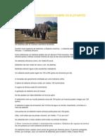 30 Pequenas Curiosidades Sobre Os Elefantes