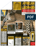 African Leopard - Infographic