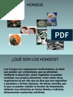 Hongos Expo