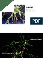 3_sinapse_nt_mecanismo