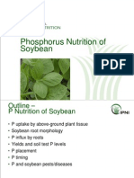 2007. P Nutrition of Soybean