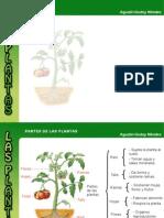 Diapositivas La Planta