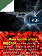 13. Flora Normal de Los Animales