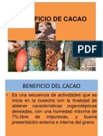 Beneficio de Cacao - 2011