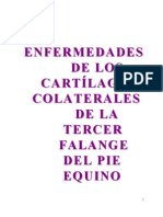 fibrocartilagos-alares