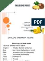 Agribisnis Nanas