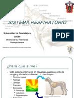 sistemarespiratorio-