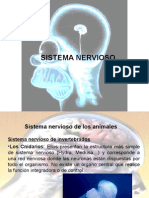 sistema nervioso III medio nº1