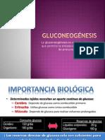 2-Gluconeogenesis