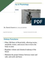 The Urinary System.pdf