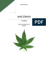 Maconha Cannabis