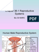 Chapter 36-1 Reproductive Systems