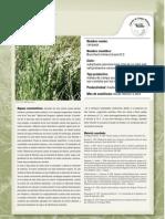 R_126_60 Carqueja Plan Agropecuarios
