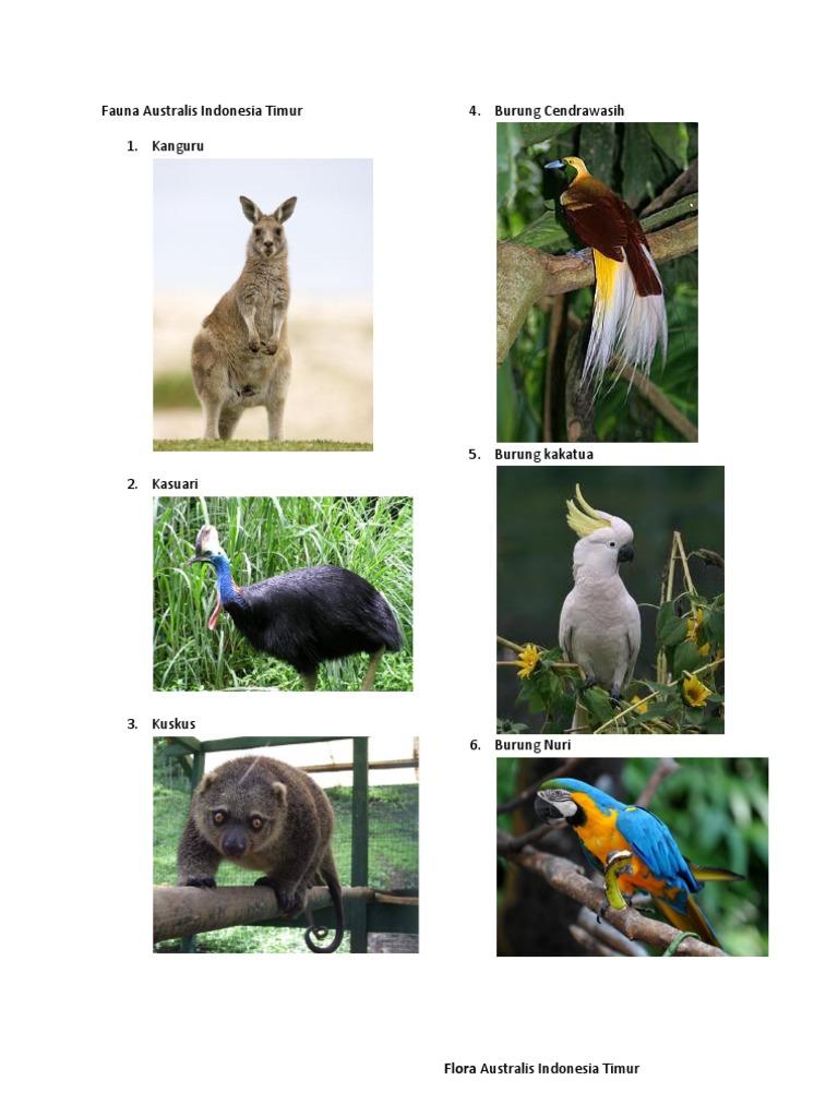 Download 7500 Gambar Fauna Timur Terbaru Gratis Pixabay Pro