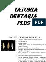 Anatomia Dent Aria Plus