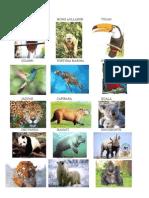 Animales en Peligro - Imagenes