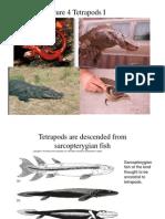 4 - Tetrapods I