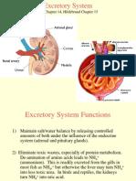 18 - Excretion System