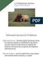 20 - Endocrine System