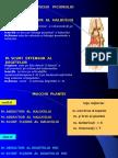 Muschii-Piciorului