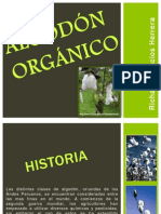 algodon organico