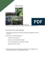 Gambar Hutan Paya Air Masin