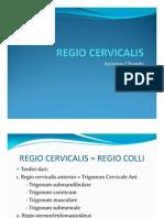 II-Anatomi_regio Cervicalis_17 Juni 2011