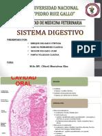 Exposicion Sistema Digestivo 1