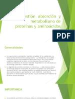 Digestión, absorción  y metabolismo de proteínas