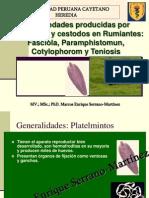Clase Fasciola Paramphistomun Cotylophorom EVD 2