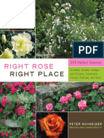 Right Rose, Right Place (book layout and design)
