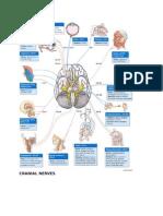 CN cranial nerves