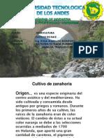 OLERICULTURA RAICES ZUNILDA.pptx