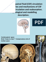 Physics of Cerebrospinal Fluid Circulation