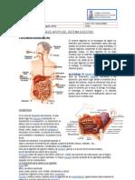 REPASO Sistema Digestivo