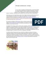 Psilocybe semilanceata.doc