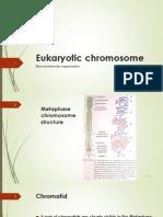 Chromosome theory of inheritance